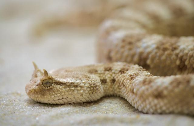 snake-terrarium-toxic-63851