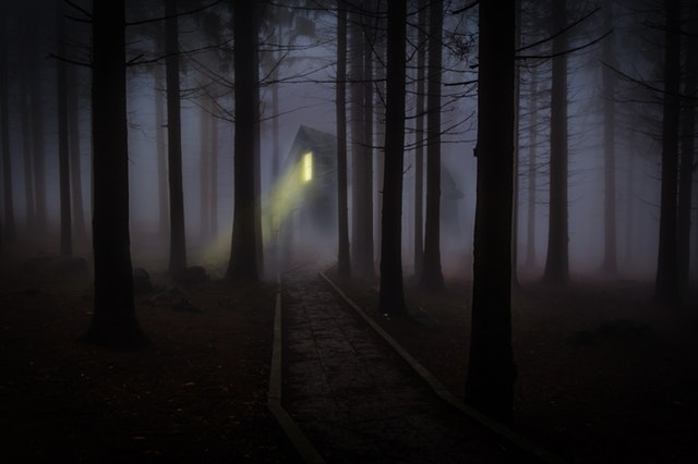foggy-mist-forest-trees-42263
