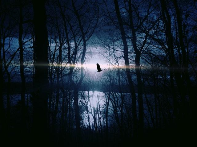 bird-fly-gespentisch-night-53989
