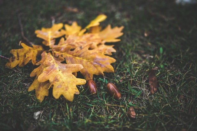 yellow-leaf-leaves-autumn.jpg