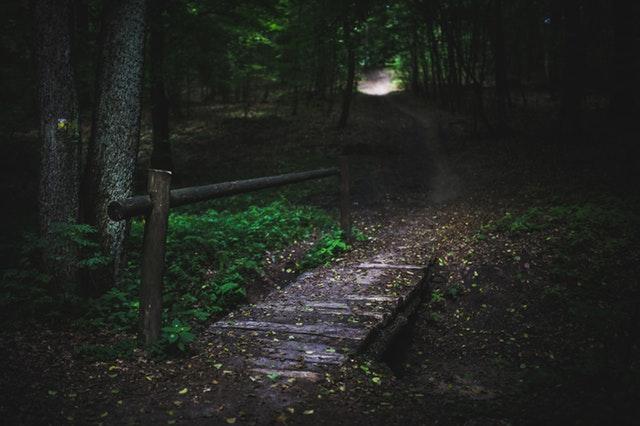 wood-nature-dark-forest.jpg