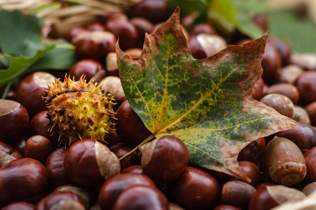 acorn-blur-brown-247553.jpg