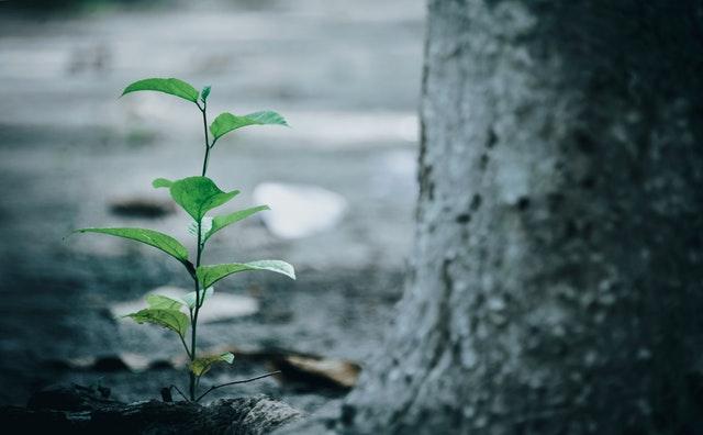 green-leaf-plant-beside-tree-1645226.jpg