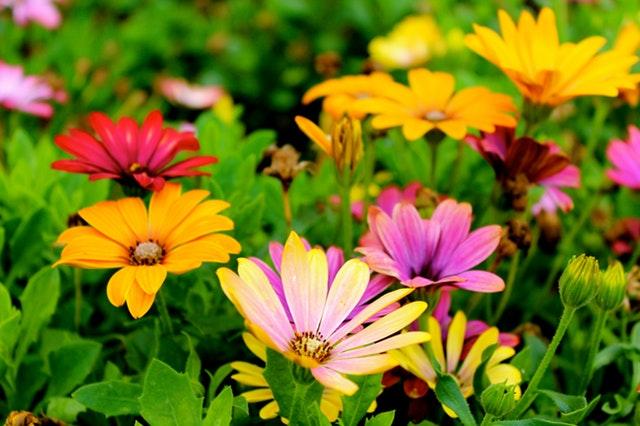 beautiful-blooming-blossom-blur-298246.jpg