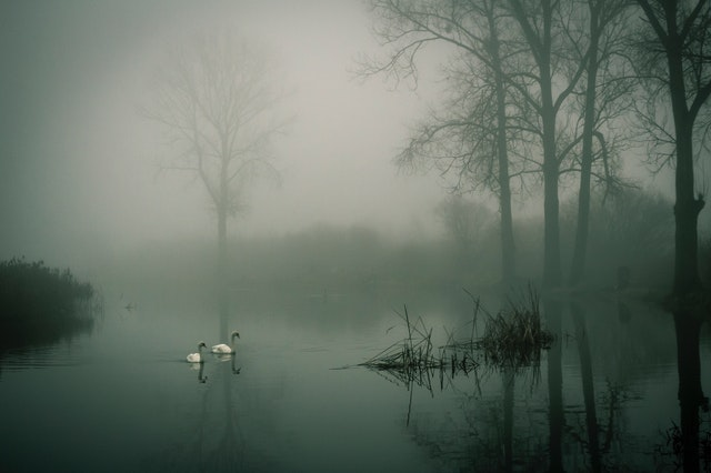 photo-of-two-white-ducks-on-water-during-fog-845619.jpg