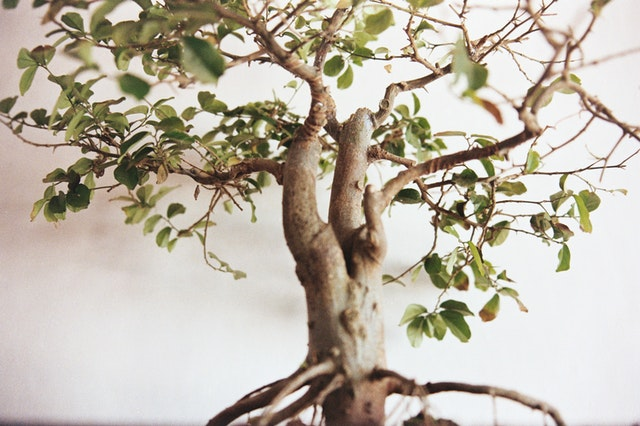 selective-focus-photography-of-green-leafed-bonsai-1671256